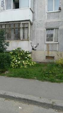 Срочная Продажа ! Квартира конец Московского проспекта, в Калининграде
