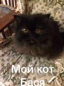 Пристроить кота, в Екатеринбурге
