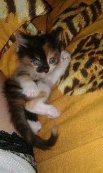 Отдам котят в хорошие руки, в г.Усть-Каменогорск