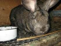 кроликов, в Омске