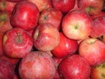 Продам очень вкусные яблока в/с, в г.Кривой Рог