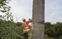 Спил, удаление деревьев в Курске, в Курске