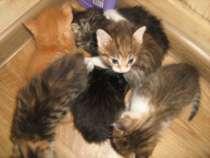 Котят в хорошие руки, совсем уже самостоятельные, в Чите