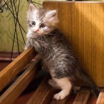 Радость в дом вместе с котом!