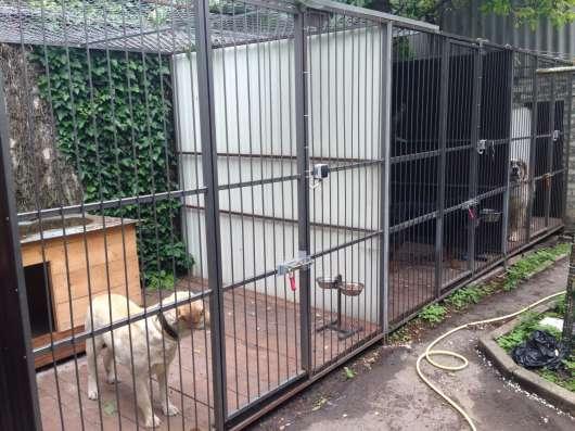 Зоогостиницы для животных на КМВ