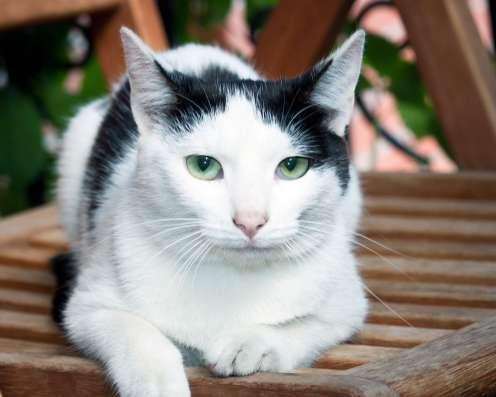 Иза-кошечка с изумрудными глазами, мышеловка,8мес