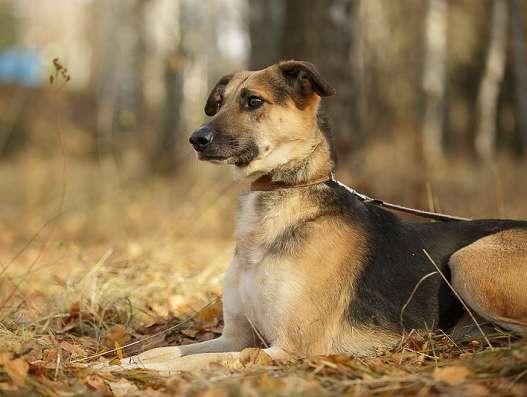 Замечательные собаки, братики Мухтар и Фред ищут хозяев