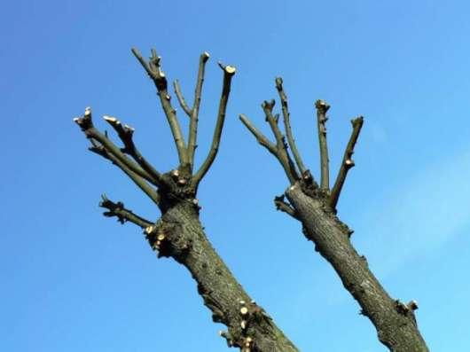 Кронирование, спил, корчевание деревьев