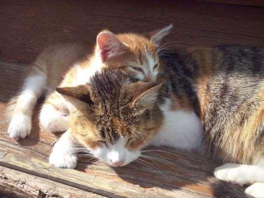 Отдам котёнка в добрые руки в Ярославле Фото 2