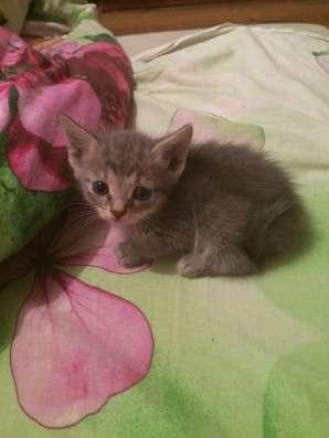 Котята даром в Казани Фото 4
