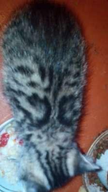 Бусинка - девочка номер 2 от нашей Муси в г. Самара Фото 2