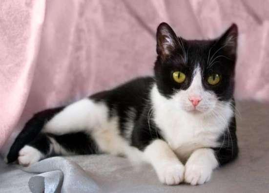 Кошка, излучающая доброту ищет дом.