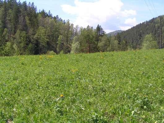 Купить земельный участок в Чемальском районе 6,5 Га в Горно-Алтайске Фото 4