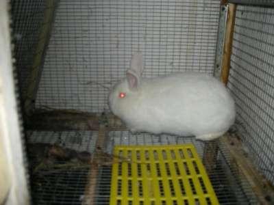 Бункерные кормушки для кроликов в г. Ессентуки Фото 3