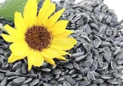 Куплю Паи Зерна Кукуруза Пшеница Ячмень