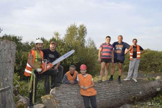 Спилить, удалить дерево в Щелково, Щелковском районе Фото 4