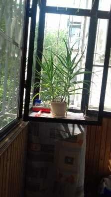 2 комнатная кв. на Яна Полуяна с ремонтом за 2600 т. р в Краснодаре Фото 2