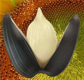 Ядро подсолнечника пищевое высший сорт