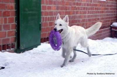 Пуллер / PULLER-Макси снаряд для собак
