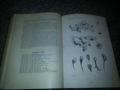 Книга по медицине за 1909г в Санкт-Петербурге Фото 2