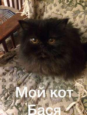 Пристроить кота
