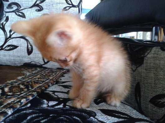 Отдам котят в хорошие руки в г. Усть-Каменогорск Фото 3