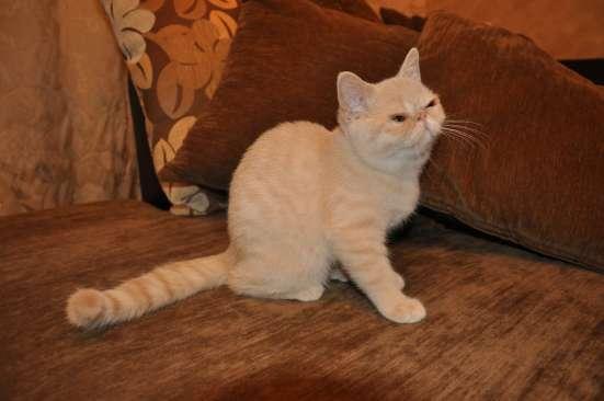 Продажа котят в Кемерове Фото 1