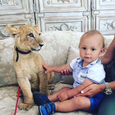 Представим вам львенка на детские праздники!