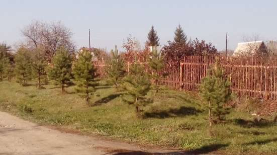 Земельный участок в коттеджном поселке в Бийске Фото 4