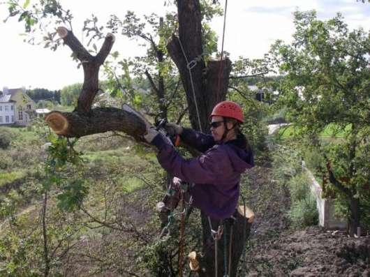 лка (вырубка) деревьев. Обрезка веток. Корчевание пней в Новосибирске Фото 3