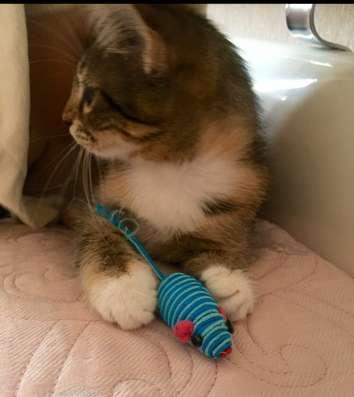 Милый котёнок в ласковые ручки, с добрым сердцем в г. Нальчик Фото 3