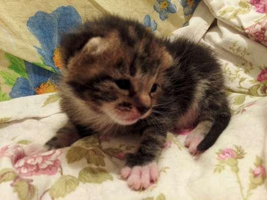 Великолепный маленький тигренок мраморного окраса