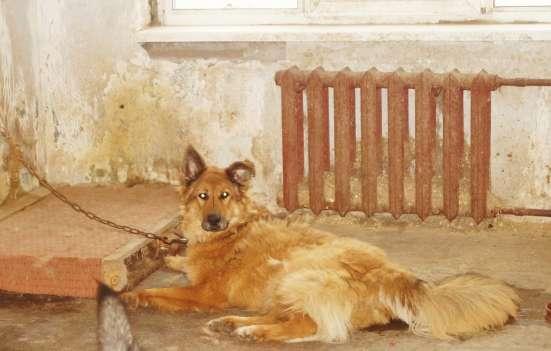 Собачки из приюта ищут любящих хозяев
